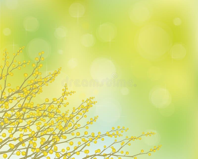 Flores da mimosa do vetor no fundo da mola. ilustração stock