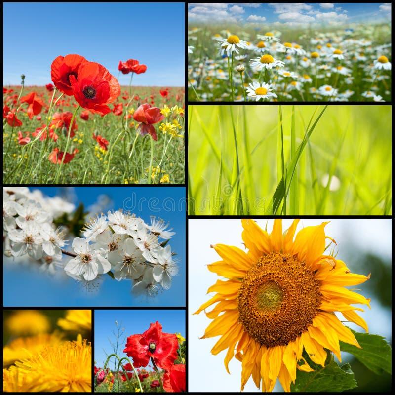 Flores da mola imagens de stock