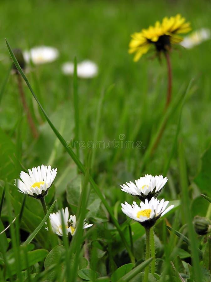 Flores da mola imagem de stock royalty free