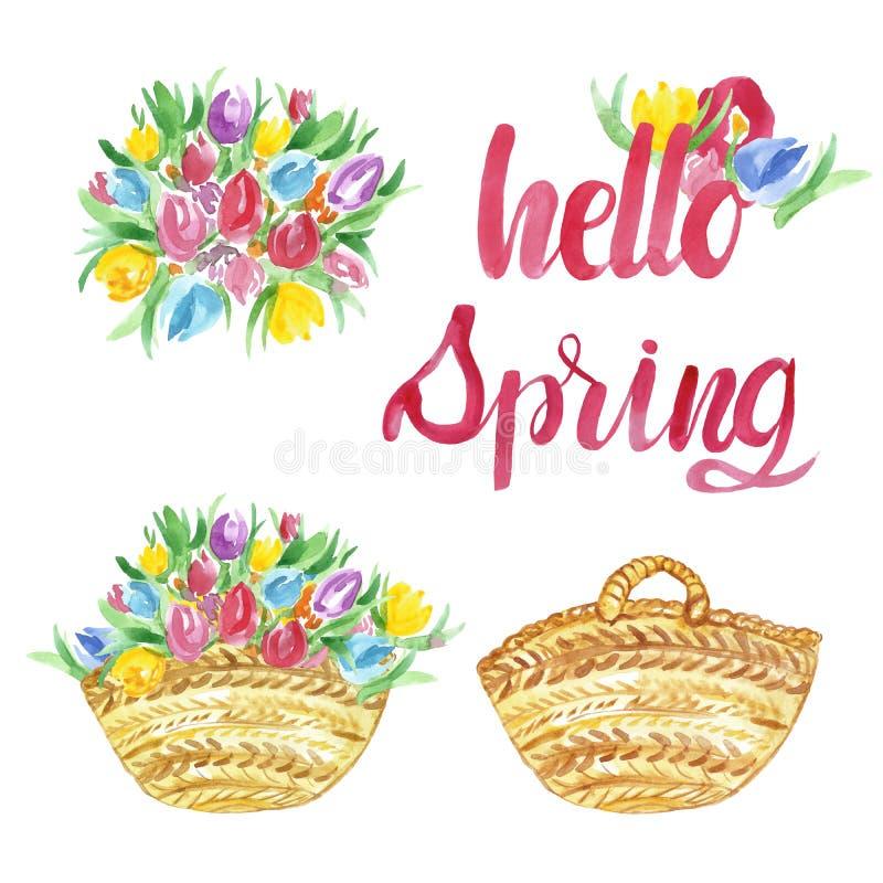 Flores da mola da aquarela e da tulipa do verão com cesta, ilustração floral no fundo branco ilustração stock