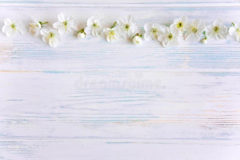 Flores da mola da cereja em um fundo de madeira com um lugar para uma inscrição Projeto para o cartão com flores da cereja fotos de stock royalty free