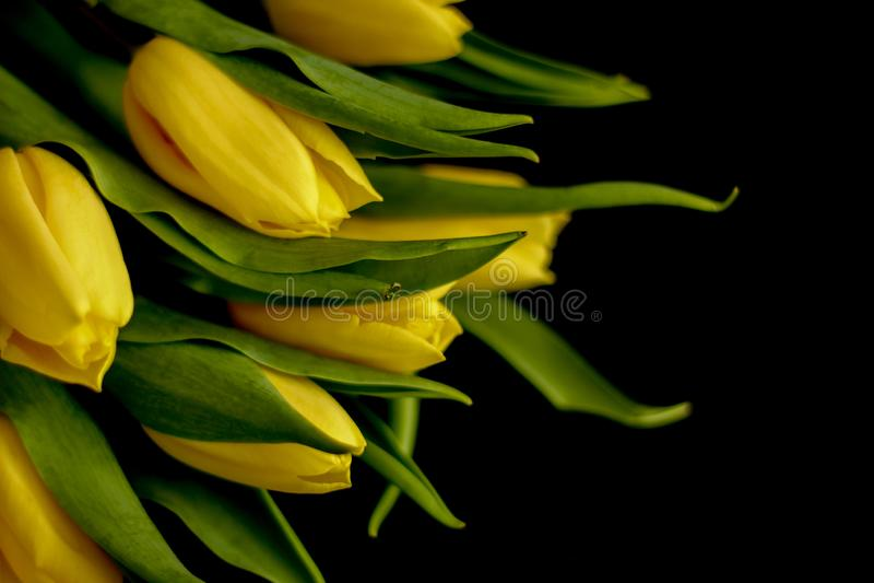 Flores da mola - conceito perfeito para meios sociais foto de stock