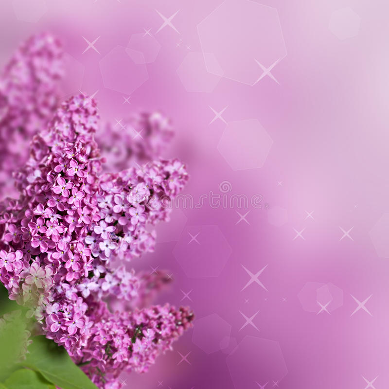 Flores da mola das violetas fotos de stock royalty free