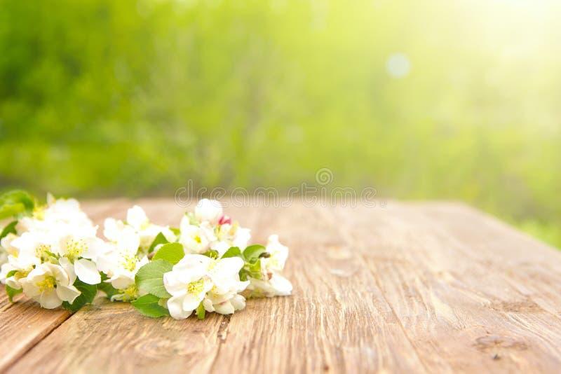 Flores da mola de ramos de árvore de florescência da maçã na tabela de madeira rústica sobre o jardim verde sunbeam imagem de stock royalty free
