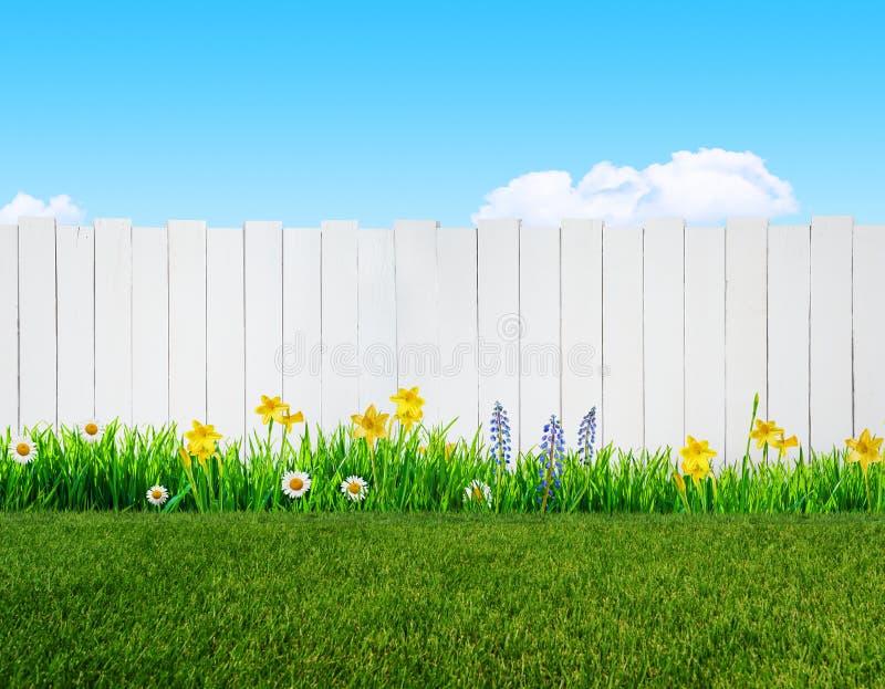 Flores da mola e cerca de madeira do jardim ilustração royalty free
