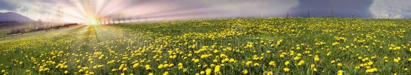Flores da mola e do verão da clareira fotografia de stock