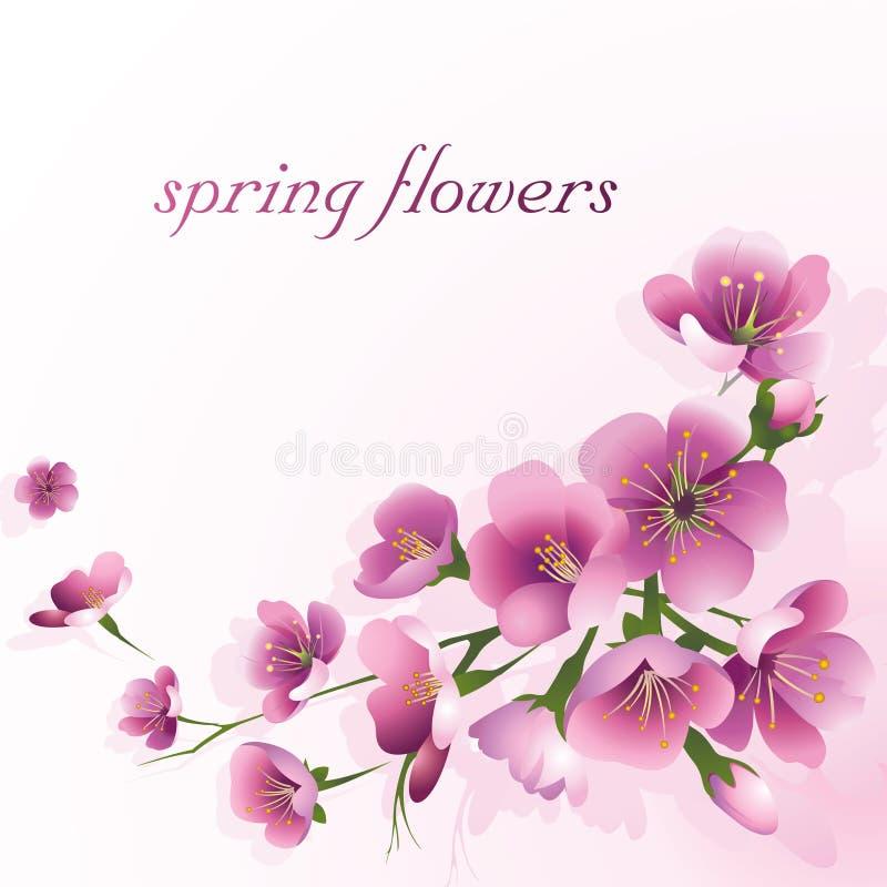 Flores da mola em um claro - fundo cor-de-rosa ilustração stock