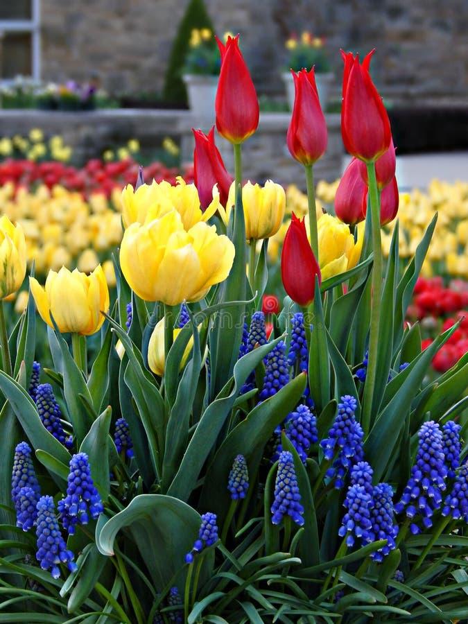 Flores da mola em um jardim botânico foto de stock royalty free
