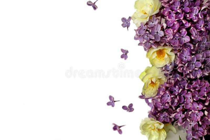 Flores da mola isoladas no branco foto de stock