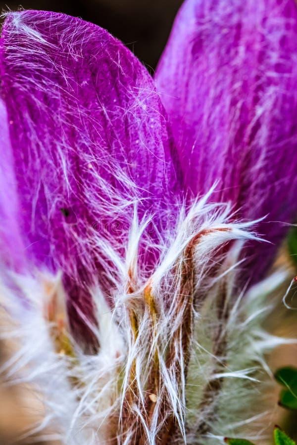 Flores da mola, maior Moncton, Novo Brunswick, Canadá fotos de stock