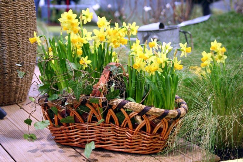 Flores da mola na cesta da natureza fotografia de stock