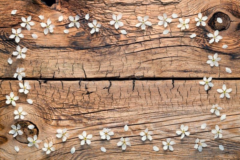 Flores da mola no fundo de madeira imagens de stock