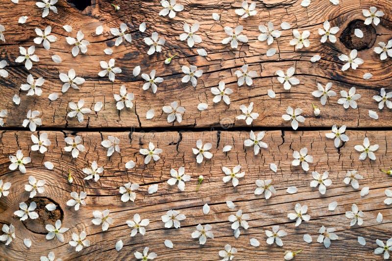 Flores da mola no fundo de madeira fotos de stock royalty free