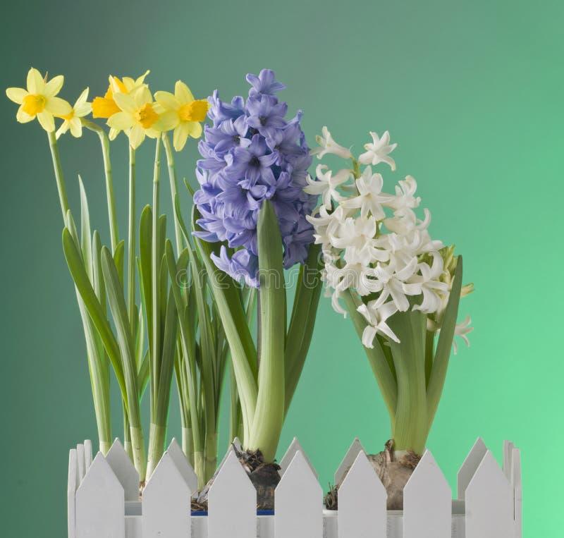 Flores da mola no fundo verde foto de stock royalty free