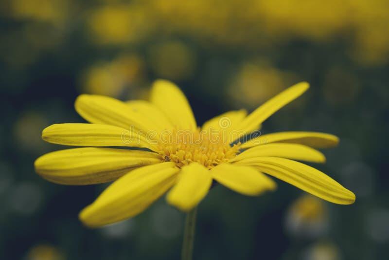 Flores da mola no prado imagem de stock
