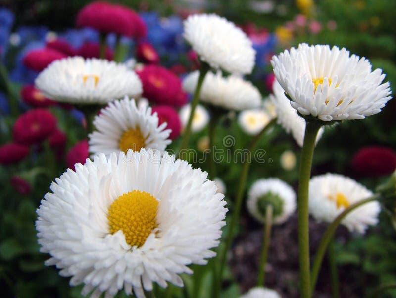Flores da mola no quadrado do templo fotos de stock royalty free