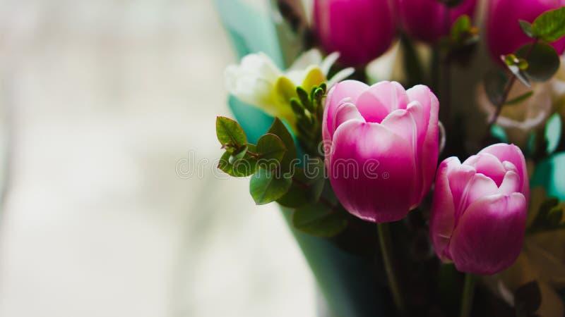 Flores da mola - um ramalhete das tulipas cor-de-rosa iluminadas com luz suave imagem de stock royalty free