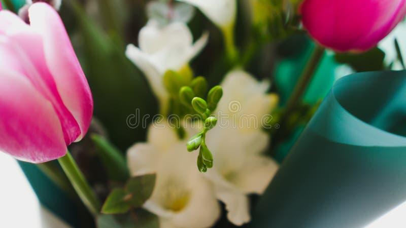 Flores da mola - um ramalhete das tulipas cor-de-rosa iluminadas com luz suave imagens de stock