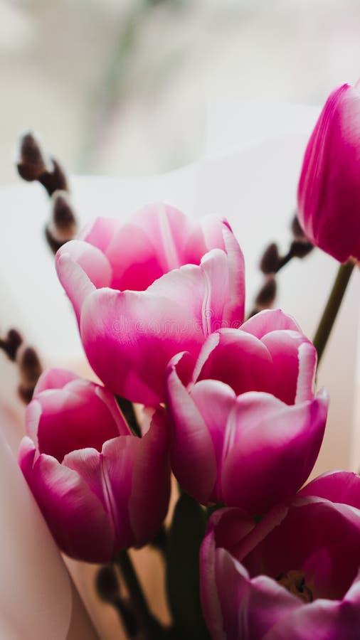 Flores da mola - um ramalhete das tulipas cor-de-rosa iluminadas com luz suave fotografia de stock