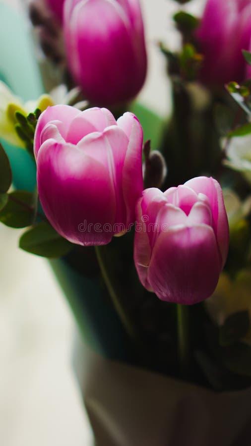 Flores da mola - um ramalhete das tulipas cor-de-rosa iluminadas com luz suave fotos de stock royalty free