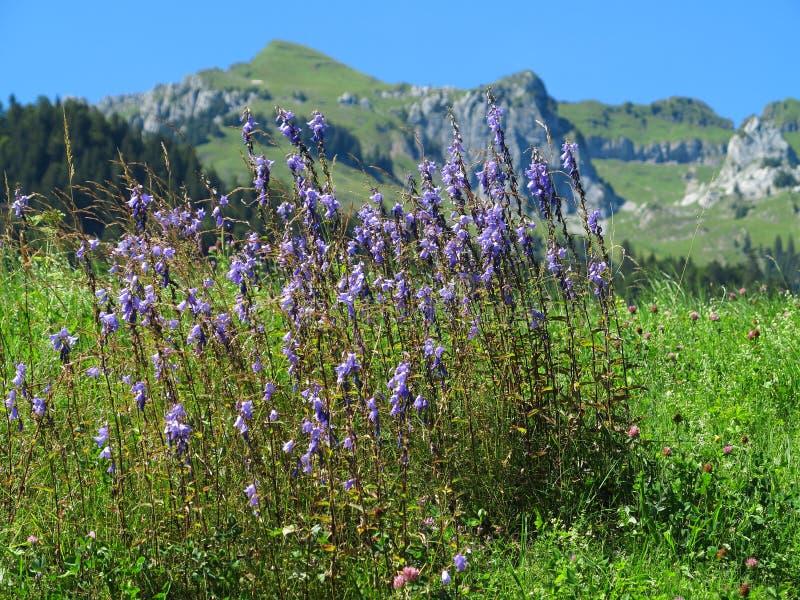 Flores da montanha na paisagem do maciço fotos de stock