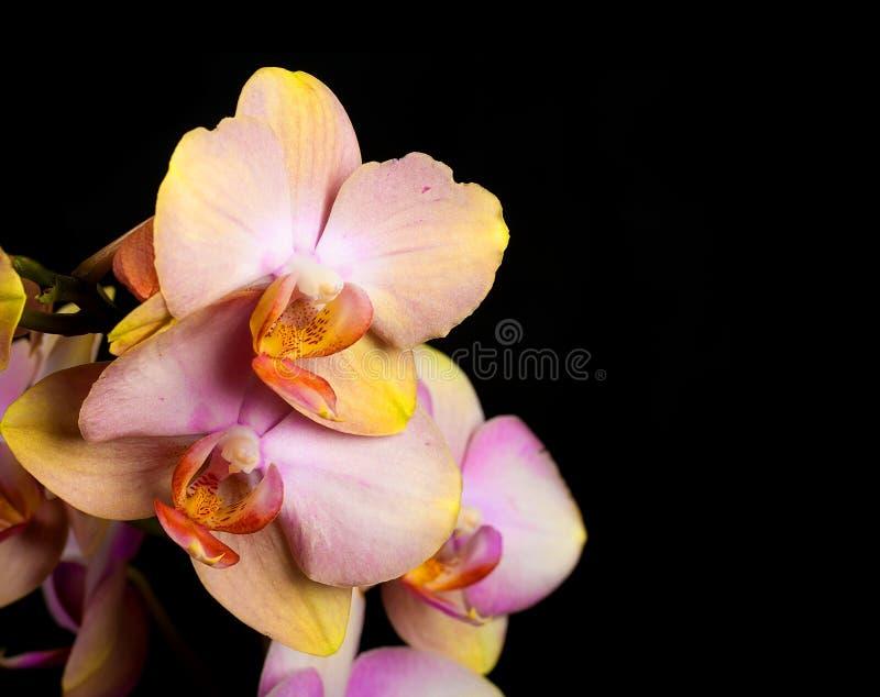 Flores da orquídea imagens de stock