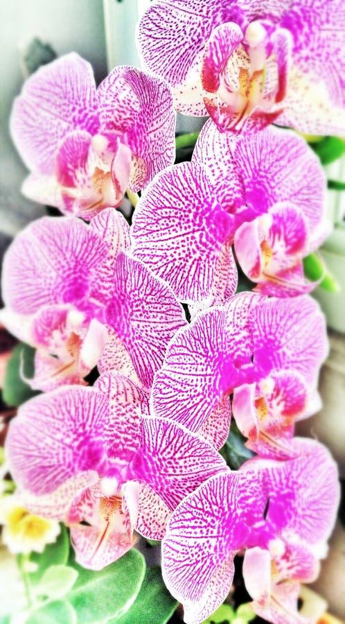 Flores da orquídea imagem de stock