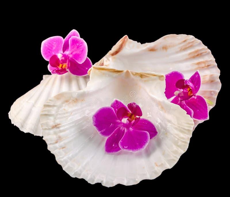 Flores da orquídea e shell coloridos do mar foto de stock