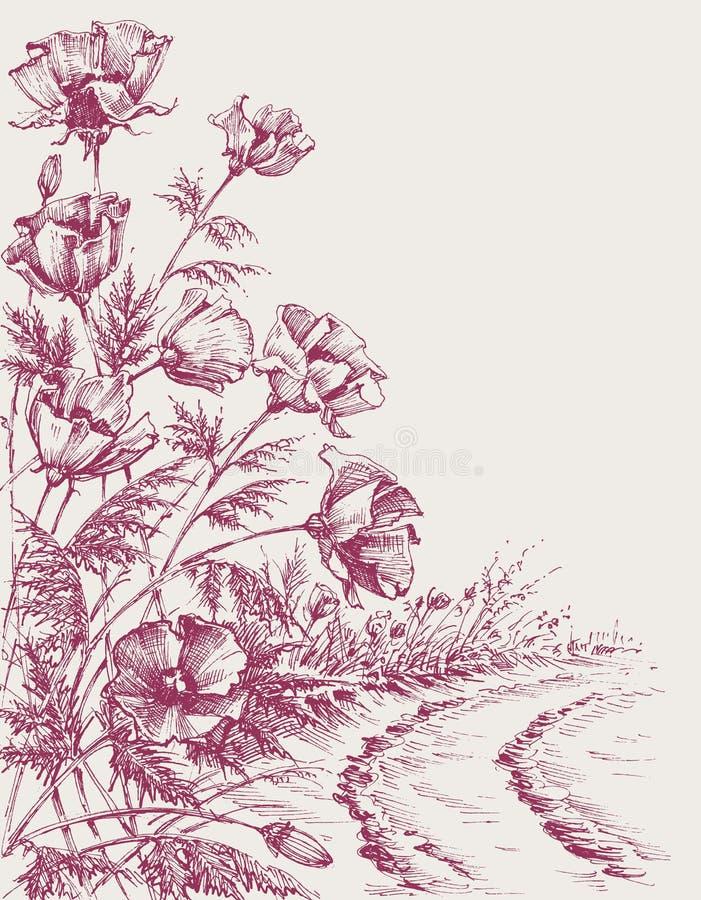 Flores da papoila na estrada ilustração royalty free