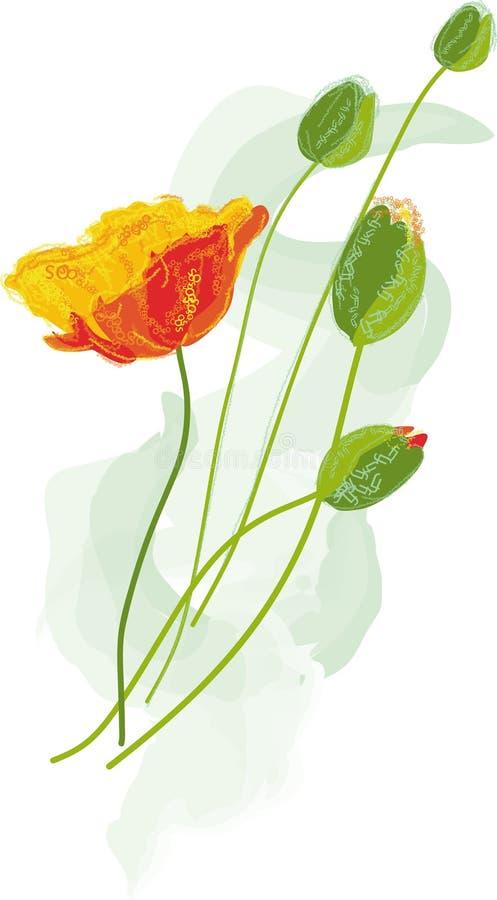 Flores da papoila - vetor ilustração stock