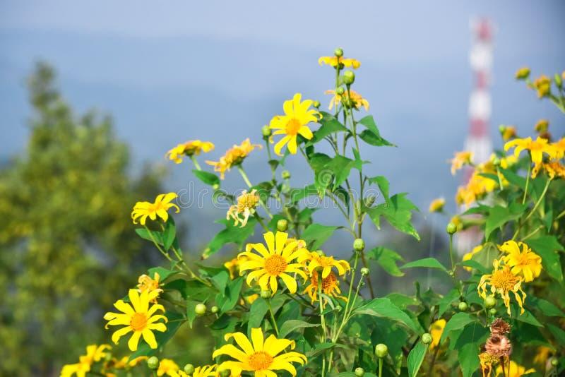 Flores da parte superior de um monte foto de stock royalty free