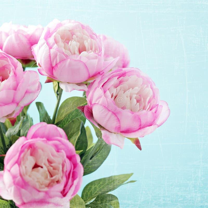 Flores da peônia fotografia de stock royalty free