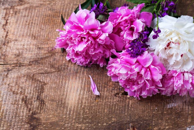 Flores da peônia imagem de stock