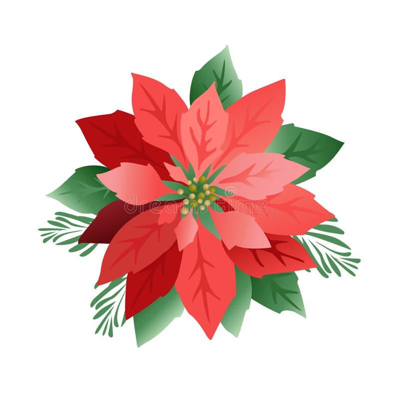 Flores da poinsétia do Natal, folhas do vermelho Tampa, convite, bandeira, cartão Ilustração do vetor ilustração royalty free
