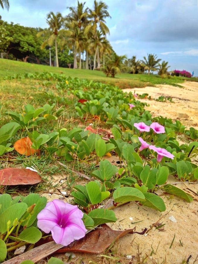 Flores da praia foto de stock