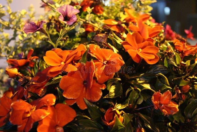 Flores da rua do canal da caixa postal de Birmingham foto de stock royalty free