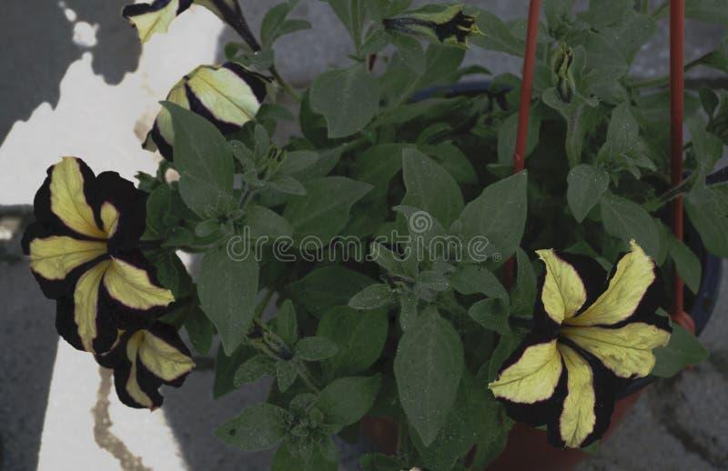 Flores da rua na caixa fotografia de stock royalty free
