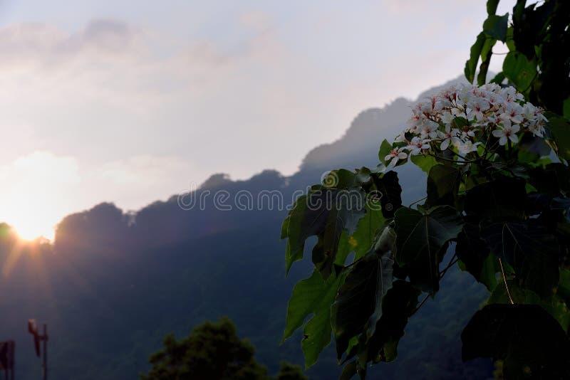 Flores da ?rvore de Tung imagens de stock royalty free