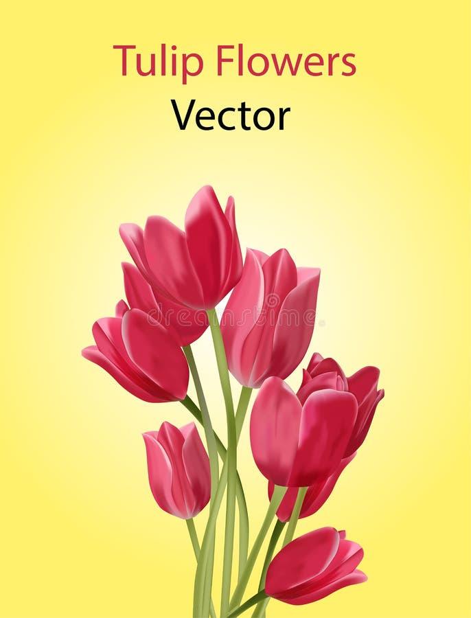 Flores da tulipa do vetor imagens de stock royalty free