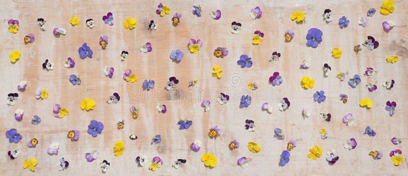 Flores da viola espalhadas sobre a placa de madeira velha imagem de stock