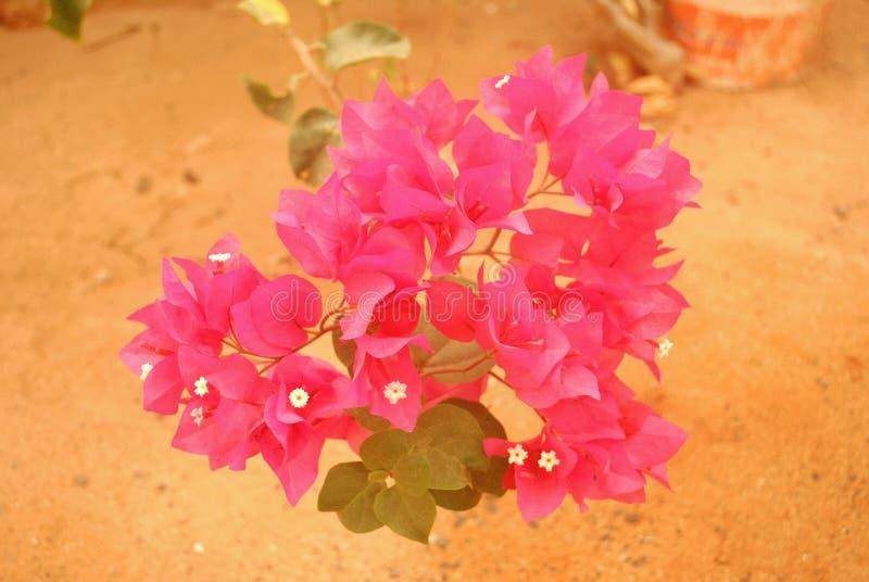 Flores dadas forma coração imagem de stock