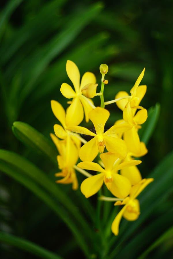 Flores das orquídeas foto de stock