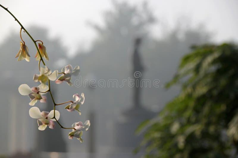 Flores das orquídeas fotografia de stock royalty free