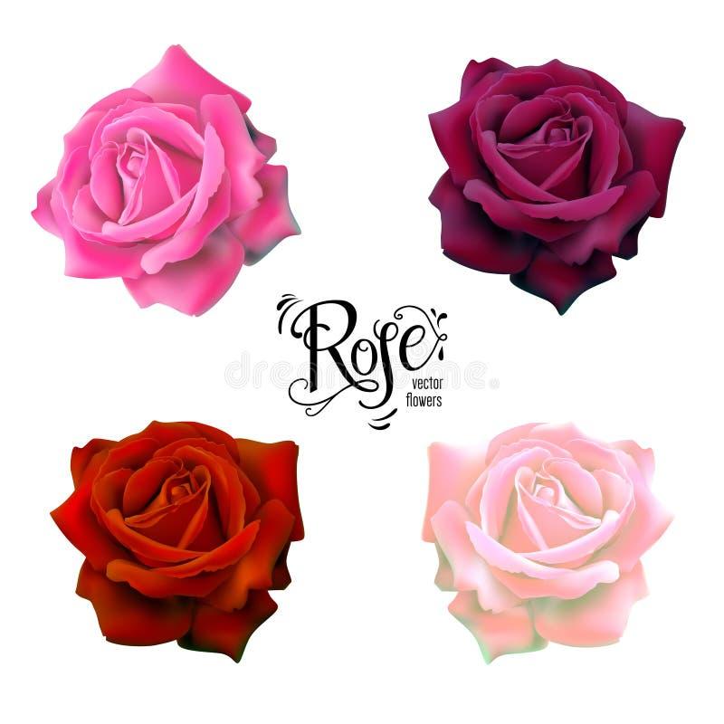 Flores das rosas ajustadas ilustração royalty free