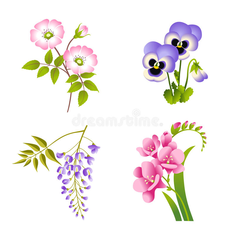 Flores das rosas, do amor perfeito, da glicínia e do fúcsia ilustração do vetor