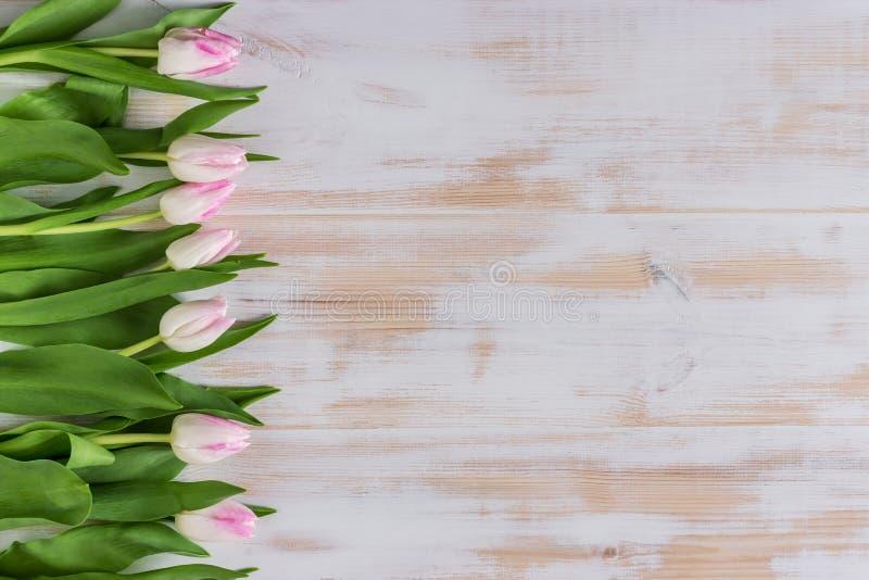 Flores das tulipas da mola no fundo de madeira fotos de stock royalty free