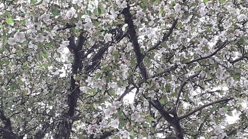 Flores de abaixo imagens de stock royalty free