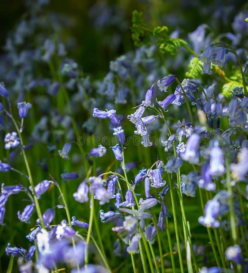 Flores de alarma azules fotografía de archivo