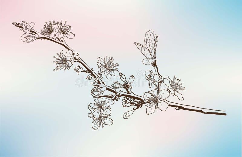 Flores de Apple ilustração stock
