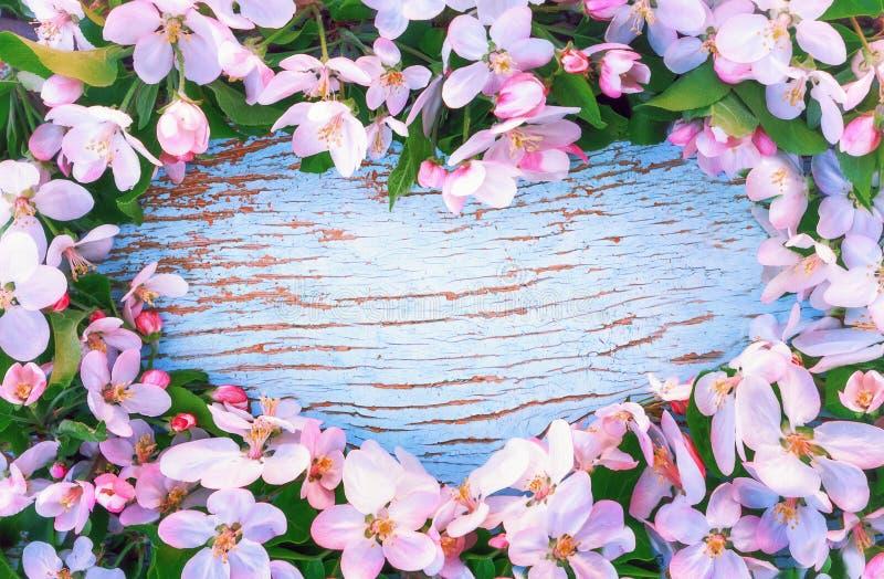 Flores de Apple alrededor del fondo de madera azul en forma de corazón fotos de archivo libres de regalías